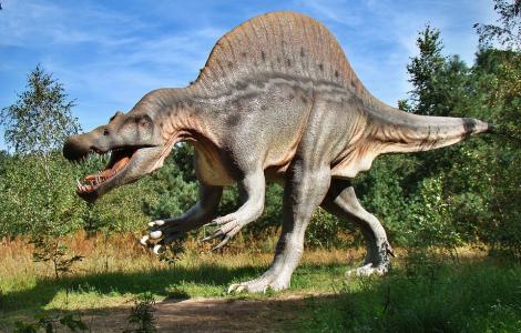 Park Jurajski w Solcu Kujawskim - w Świecie Dinozaurów 1 Dzień