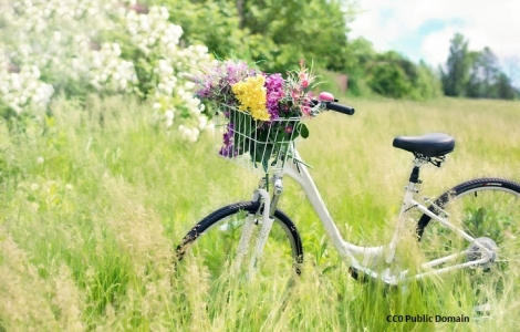 Wycieczka Rowerowa Bory Tucholskie 8 Dni