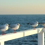 the-seagulls-630915_640 Pixabay License Wycieczka do Gdańska