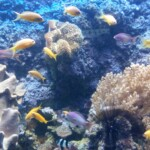 Wycieczka Trójmiasto Gdynia Akwarium. Zdjęcie własnością Biura Podróży Variustur
