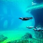 Wycieczka Kotlina Kłodzka Wrocław Oceanarium